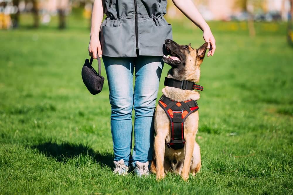 pet business leadership
